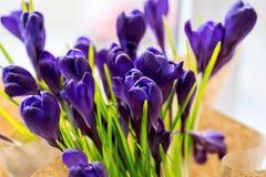 Açafrões bonitos Imagem de Stock Royalty Free