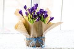 Açafrões bonitos Imagens de Stock