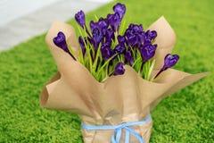 Açafrões bonitos Imagens de Stock Royalty Free