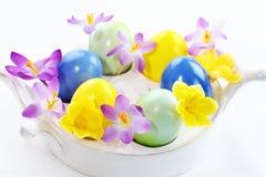 Açafrões bonitos para Easter Fotos de Stock Royalty Free