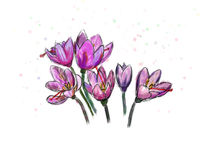 Açafrões brilhantes no fundo branco Fotografia de Stock Royalty Free