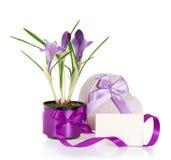Açafrões, caixa de presente e cartão Fotos de Stock Royalty Free