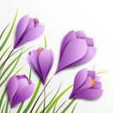 Açafrões. Cinco flores de papel no fundo branco Imagens de Stock