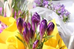 Açafrões do Lilac Imagens de Stock Royalty Free