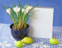 Açafrões e ovos brancos dos easters Imagem de Stock Royalty Free