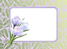 Açafrões e quadro Imagem de Stock Royalty Free
