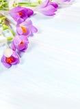 Açafrões e snowdrops Imagens de Stock Royalty Free
