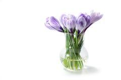 Açafrões em um vaso isolado no fundo branco Imagem de Stock