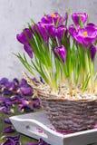 Açafrões em uma cesta Fotos de Stock