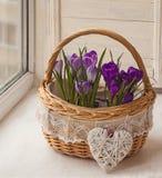 Açafrões em uma cesta na janela Imagens de Stock Royalty Free