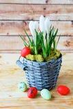 Açafrões em uma cubeta e em ovos Imagens de Stock