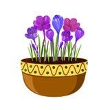 Açafrões em uma ilustração do potenciômetro Flores adiantadas da mola isoladas no fundo branco imagens de stock royalty free