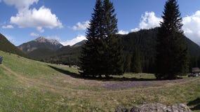 Açafrões em Zakopane Imagens de Stock