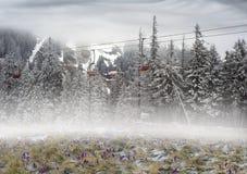 Açafrões mágicos da mola do tapete Imagem de Stock Royalty Free