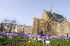 Açafrões na frente de uma igreja Imagem de Stock
