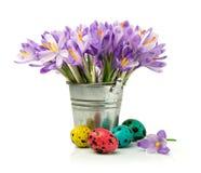 Açafrões roxos e ovos de codorniz pintados Imagem de Stock