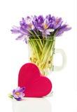 Açafrões roxos em uma caixa de presente de vidro e cor-de-rosa na forma do coração Imagem de Stock Royalty Free