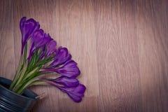 Açafrões roxos no potenciômetro Fotos de Stock