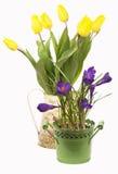 Açafrões, tulipas Imagem de Stock Royalty Free