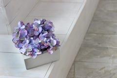 Açafrões violetas e brancos Violetas da cor roxa macia Imagens de Stock Royalty Free