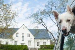 Açaime de um cão Fotos de Stock Royalty Free