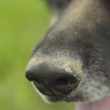 Açaime de um cão Fotos de Stock