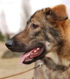 Açaime de um fim do cão acima Fotos de Stock