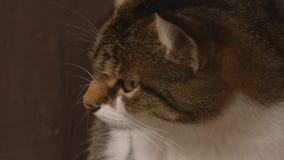Açaime de um gato video estoque