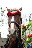 Açaime do cavalo Imagem de Stock Royalty Free