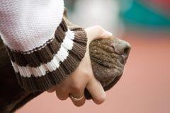Açaime fêmea da mão e do cão Foto de Stock Royalty Free