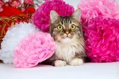 Açaime o gato em um fundo do close up das flores Fotografia de Stock