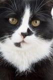 Açaime um gato em um fundo branco Fotografia de Stock