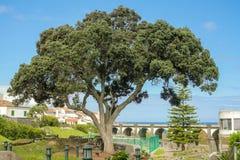 Açores island the green island. Açores island the green island in the atlantic ocean Stock Image