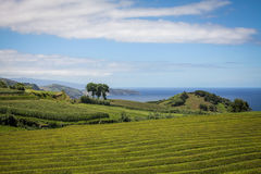 Açores island the green island Royalty Free Stock Photo