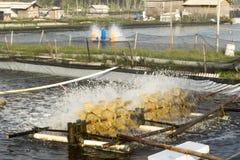 Aération d'étang à poissons Images libres de droits