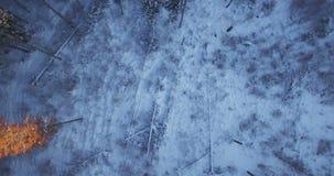 aéreo Alise a cabeça de giro sobre o tiro da floresta do inverno coberto pela neve na manhã ensolarada em Lituânia 4K video estoque