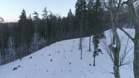 aéreo O tiro da revelacão cercado por árvores na floresta fria do inverno em Naujoji Vilnia em Rokantsikiu nevado o ` s do castel vídeos de arquivo