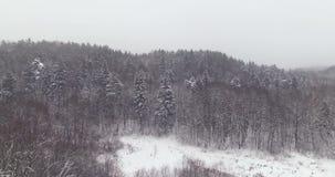 aéreo Tiro da revelacão com as árvores do campo e de floresta do inverno cobertas pela neve na névoa 4k Aperfeiçoe para o espaço  vídeos de arquivo