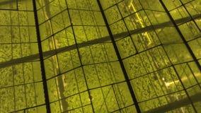 Aéreo - tiro exterior del invernadero con las luces LED encendido para las plantas crecientes metrajes