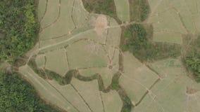 Aéreo: top abajo de los arroces de arroz colgantes del campo de la visión en la estación seca, campo en el destino popular del vi metrajes