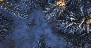 aéreo Voo aéreo acima da parte superior das árvores de floresta do nascer do sol do inverno cobertas pela neve 4K video estoque