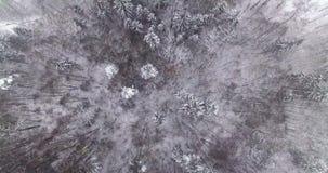 aéreo Voo aéreo liso acima da parte superior das árvores de floresta do inverno cobertas pela neve 4K video estoque