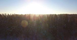 aéreo Voo liso bonito do zangão acima na frente da floresta dos abeto coberta pela neve na manhã ensolarada adiantada Raio de sol video estoque