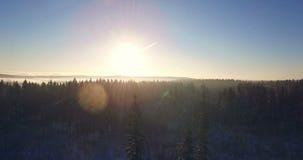 aéreo Voo liso bonito do zangão através e acima dos abeto cobertos pela neve na manhã ensolarada adiantada O raio de sol do nasce video estoque