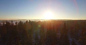 aéreo Voo liso do zangão através e acima dos abeto cobertos pela neve na manhã ensolarada adiantada O raio de sol do nascer do so filme