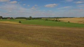Aéreo - vuelo sobre paisaje con la manada de vacas en los prados abiertos almacen de metraje de vídeo