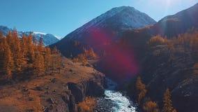 Aéreo - vuelo sobre un río del otoño de la montaña El agua es turquesa y el alerce es amarillo Vuelo en un hermoso metrajes