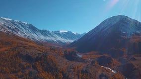 Aéreo - vuelo sobre un río del otoño de la montaña El agua es turquesa y el alerce es amarillo Vuelo en un hermoso almacen de metraje de vídeo