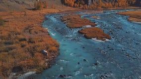 Aéreo - vuelo sobre un río del otoño de la montaña El agua es turquesa y el alerce es amarillo Vuelo en un hermoso almacen de video