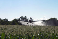 Aéronefs de saupoudrage de collecte sur la zone de maïs Photos libres de droits